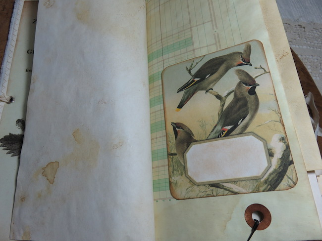 Bird Bookplates in Junk Journal
