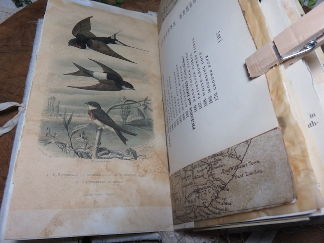 Natural History Swallows Image in Softcover Traveler's Junk Journal