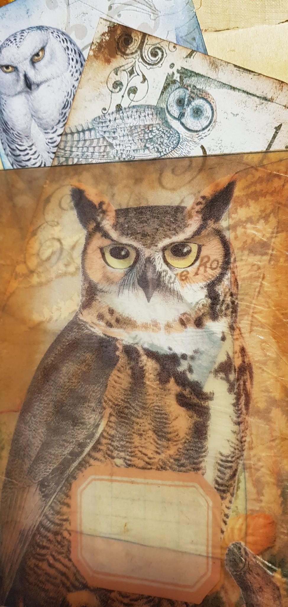 Owl Pocket Owl in Woods