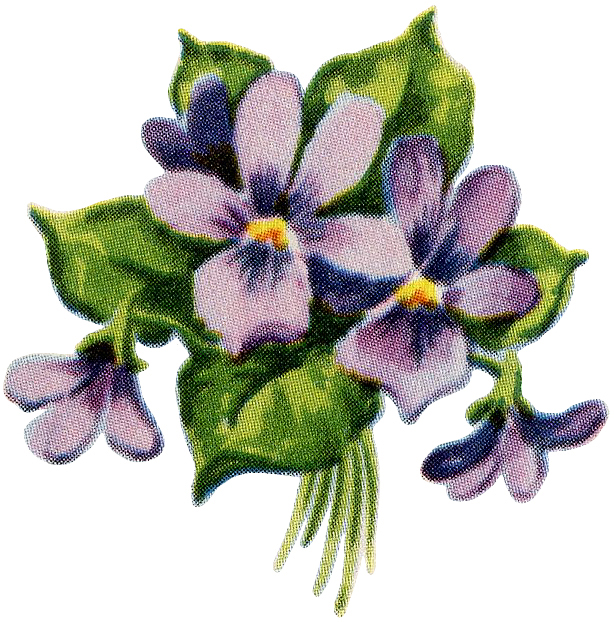 Retro Flowers Image Violets