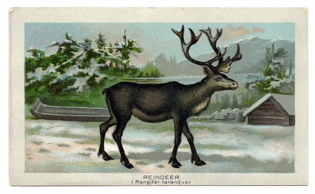 Reindeer Snow Landscape