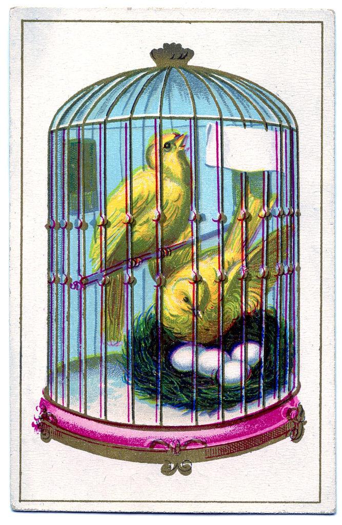vintage Canary Bird Cage