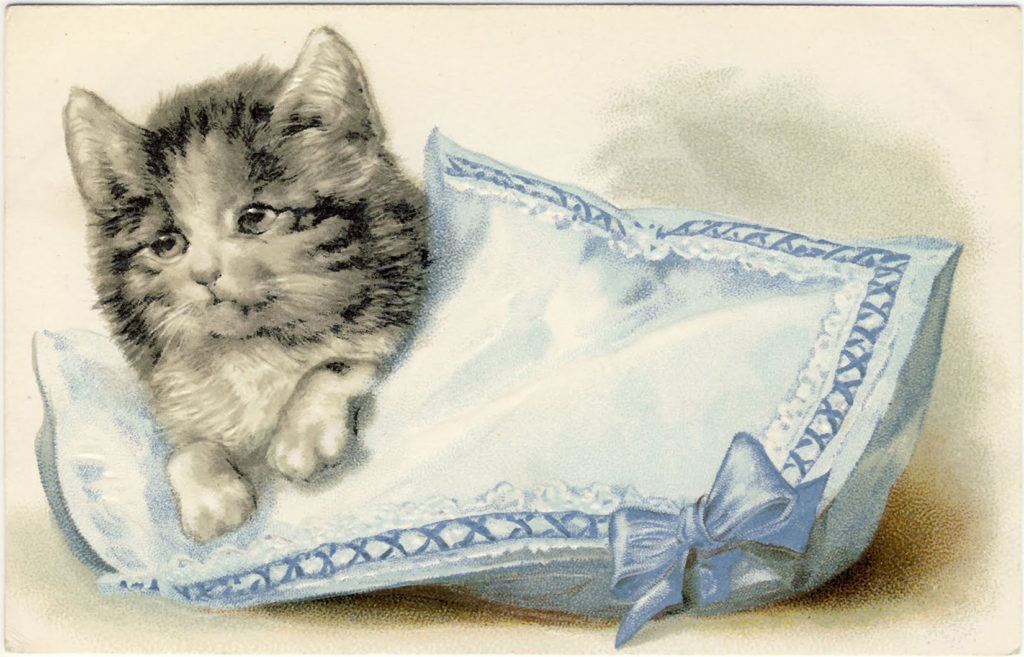 Kitten on Pillow Image