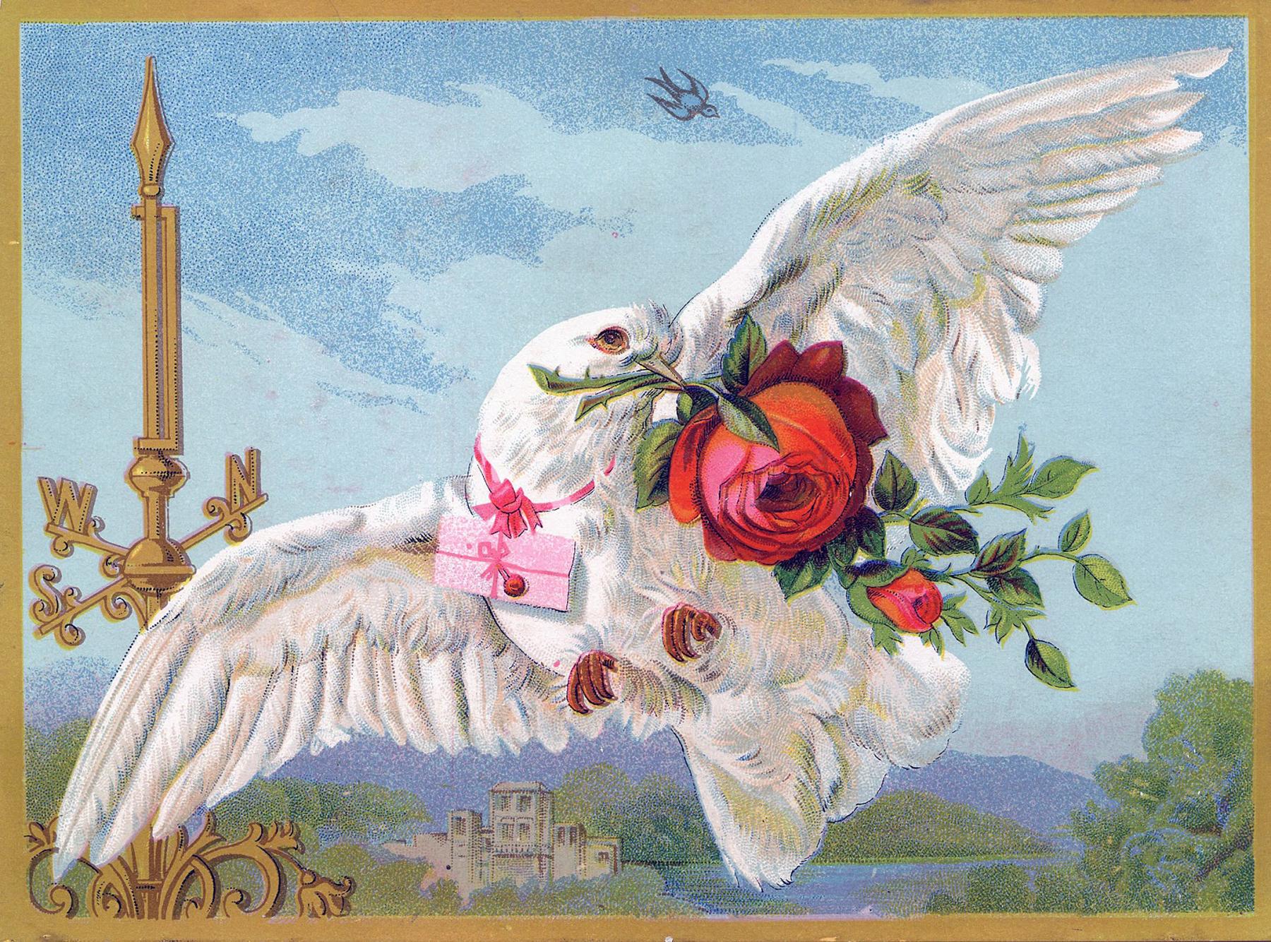 Рождения дочери, фон открытки с голубями