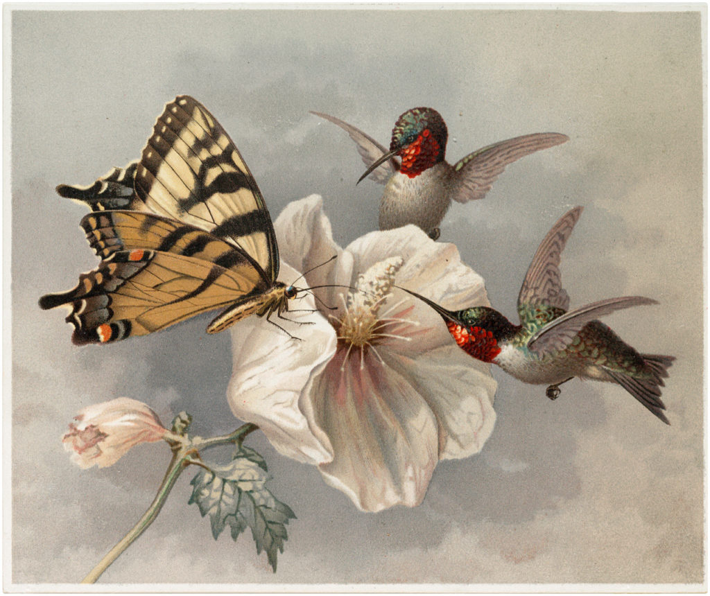 Hummingbirds with Butterfly