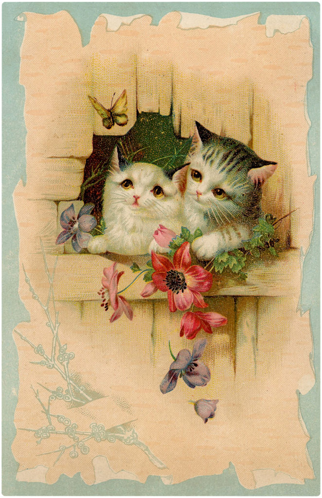 Kittens with Butterfly Image