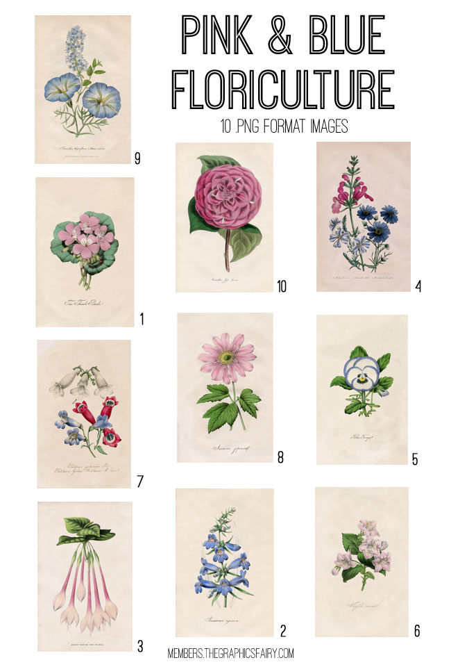 Pink and Blue Florals Printables