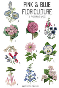 Pink and Blue Floriculture