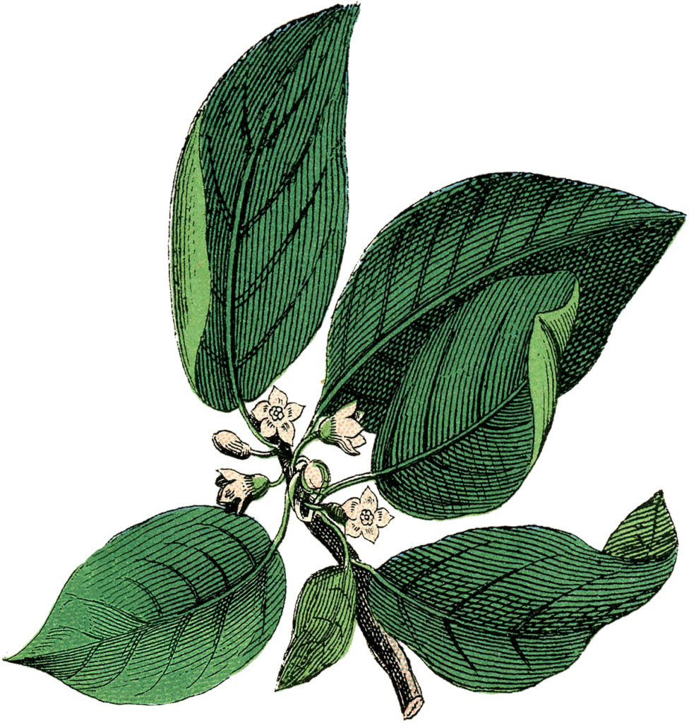 White Floral Botanical Image
