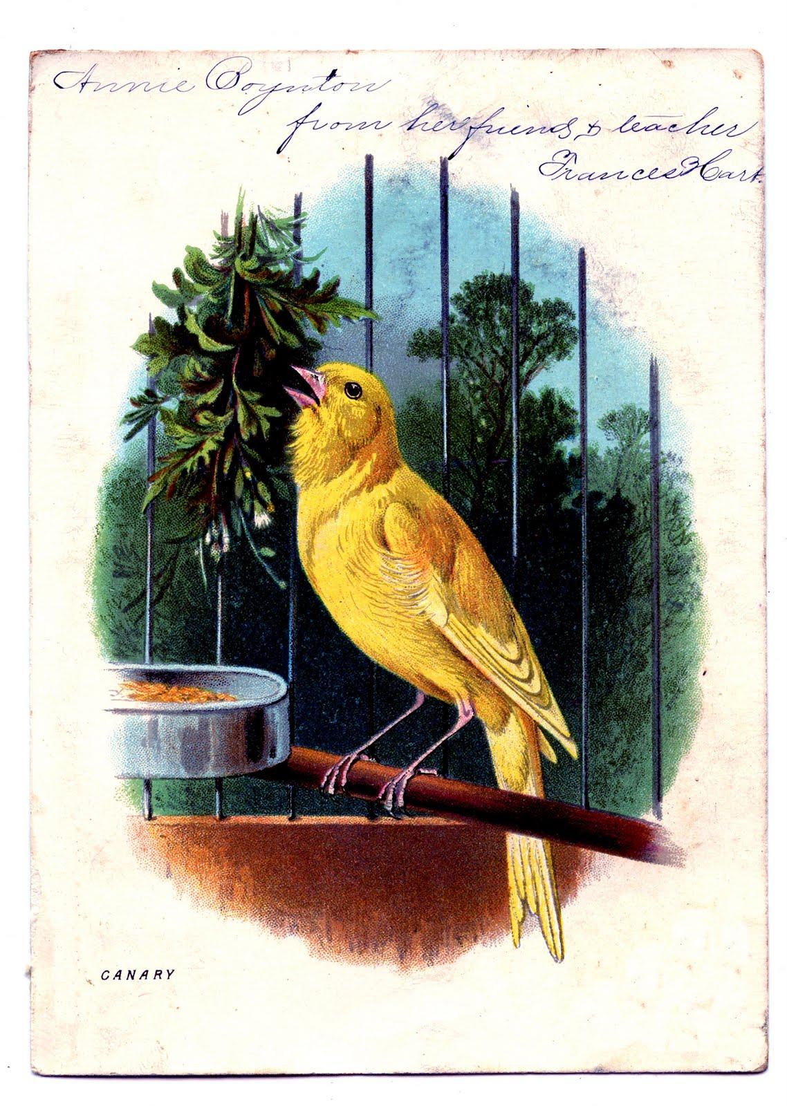 Canary Singing Image
