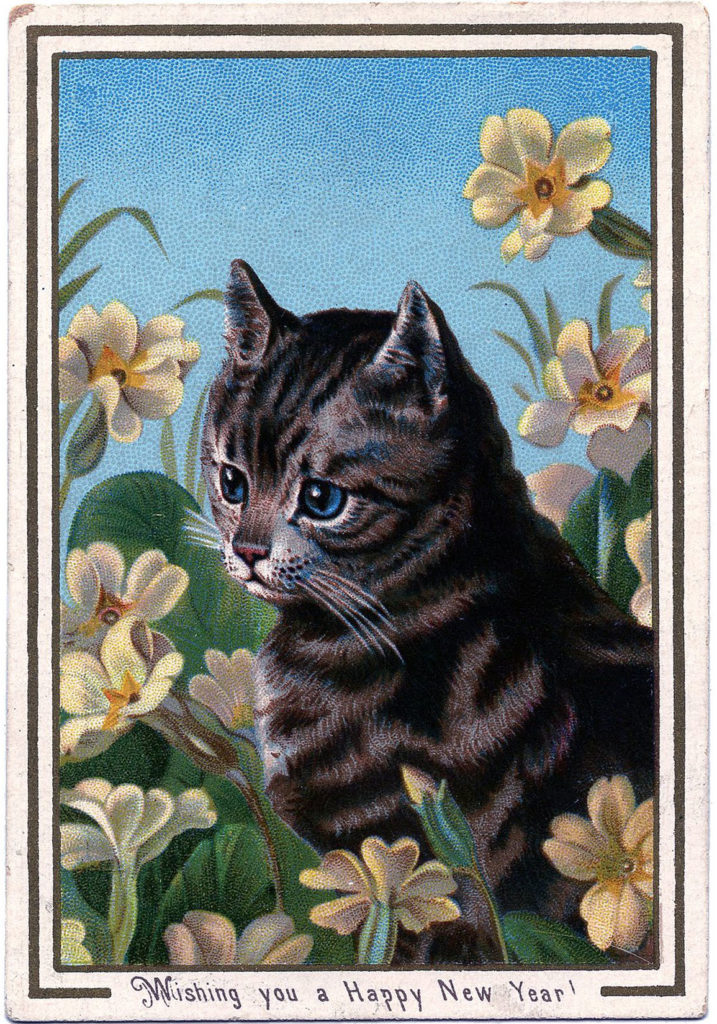 Striped Tabby Cat Picture