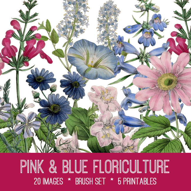 Pink and Blue Botanical Florals Image Kit