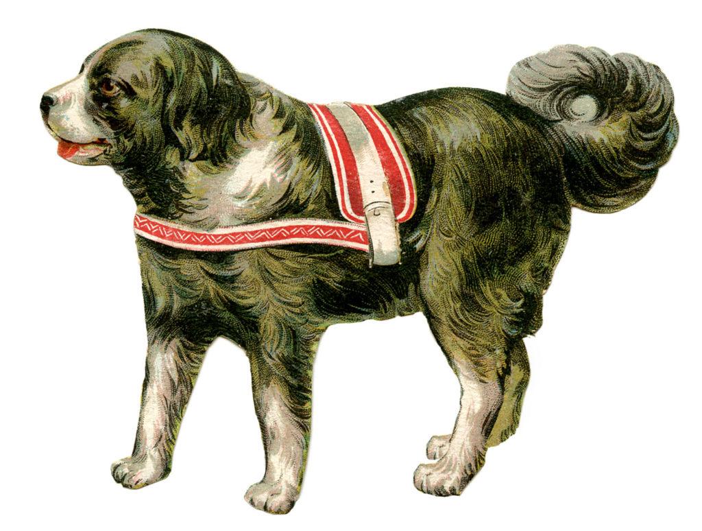 Large Circus Dog Image