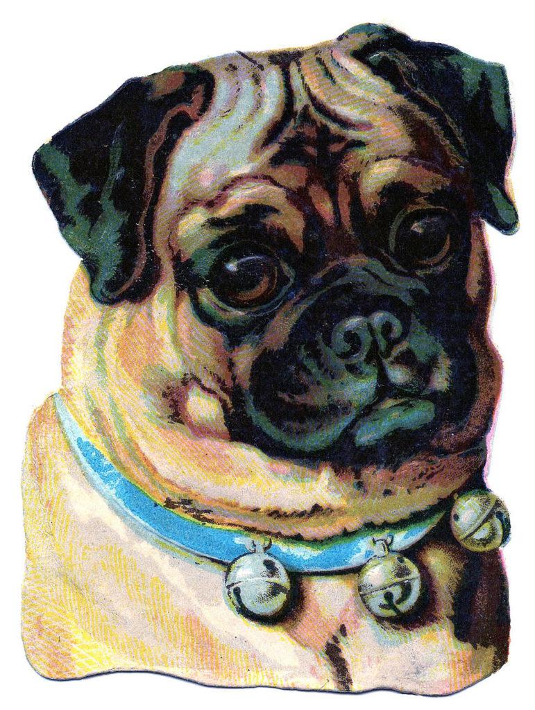 Pug Vintage Dog Image