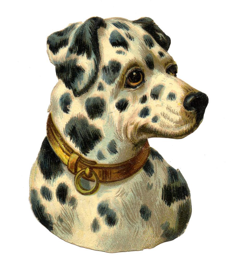 Spotted Dog Vintage Image