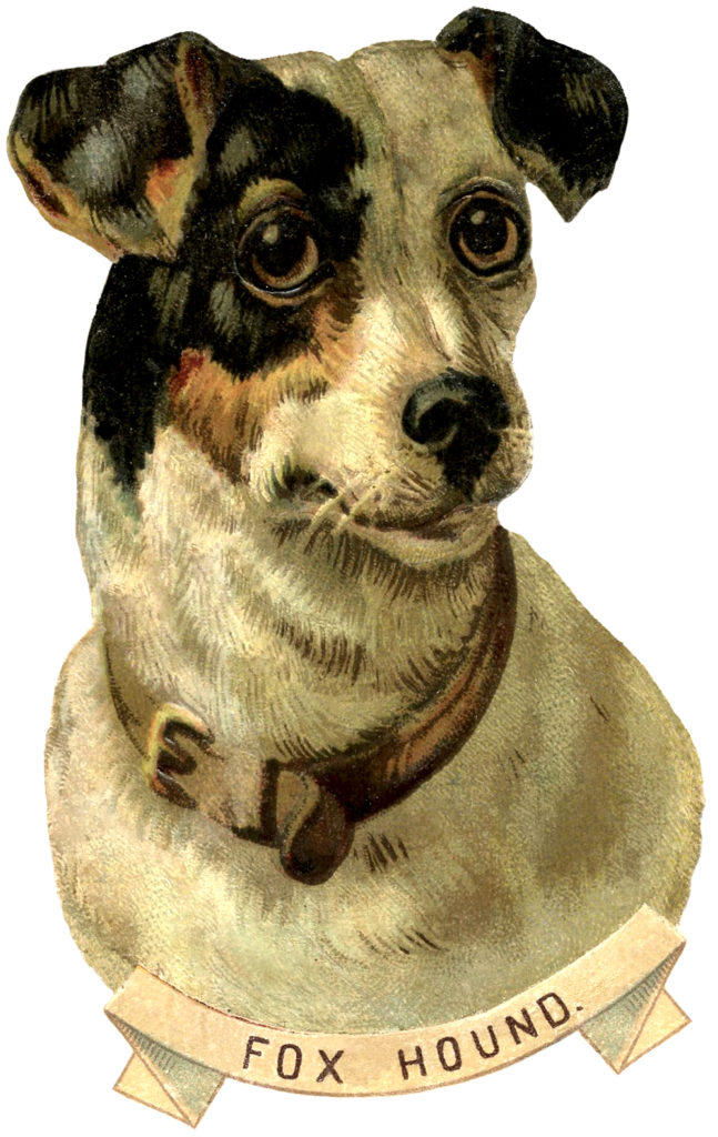 Fox Hound Dog Image