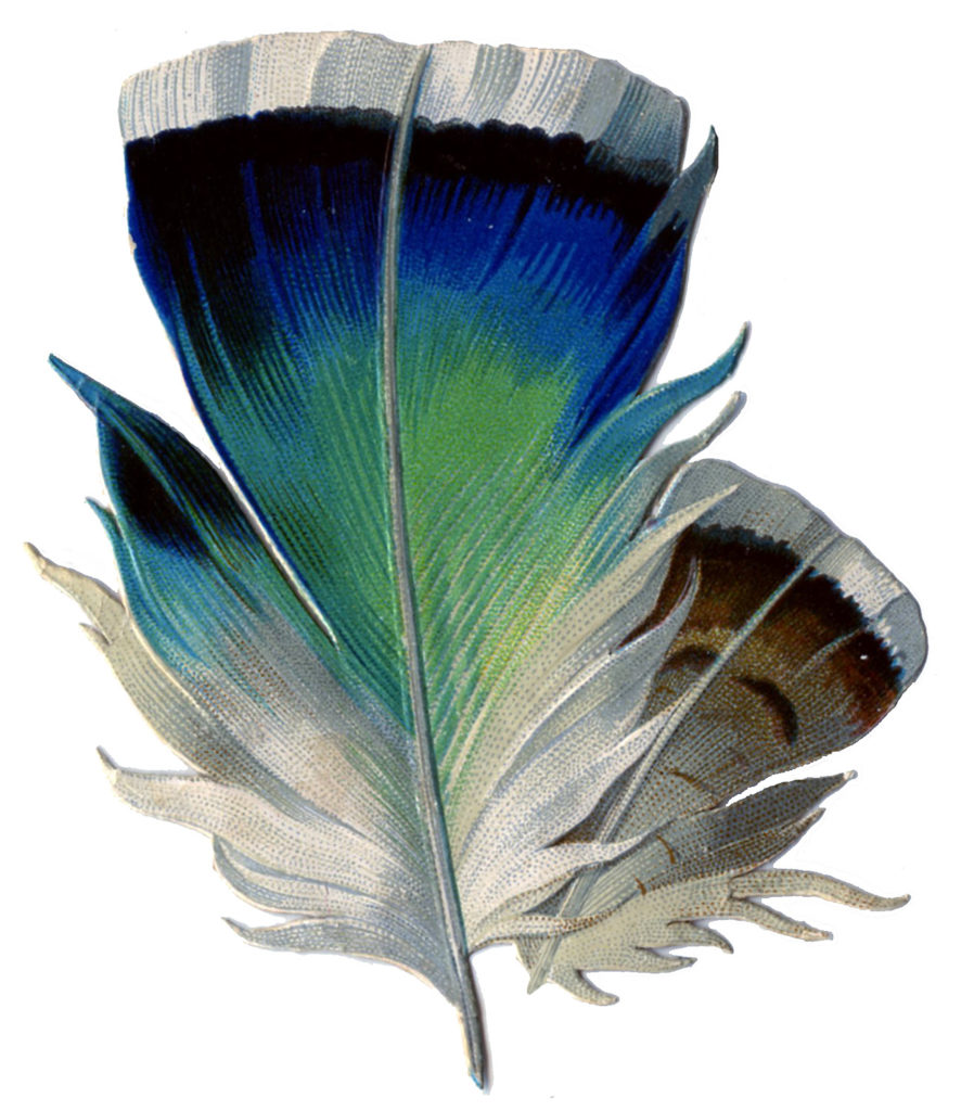 Blue Green Feather