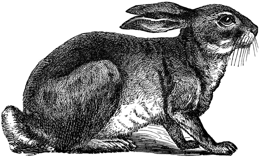 Engravings Animals Rabbit Clip Art