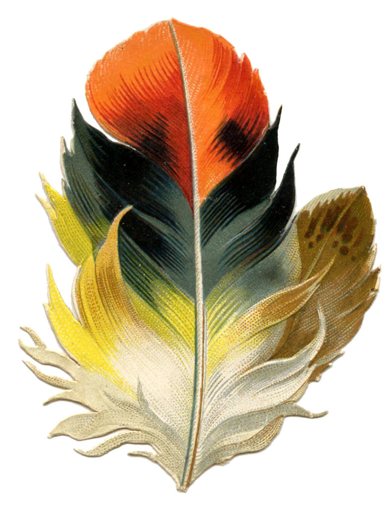 Feather Hombre Fall Colors