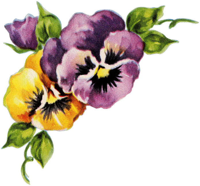Pansy Corner Graphic