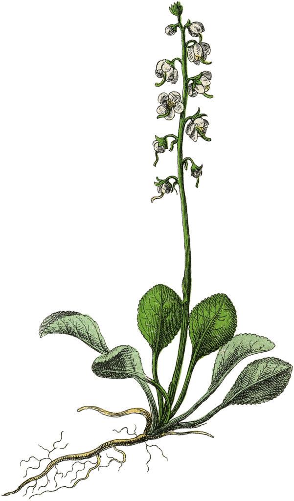 Creamy Botanical Flower Image