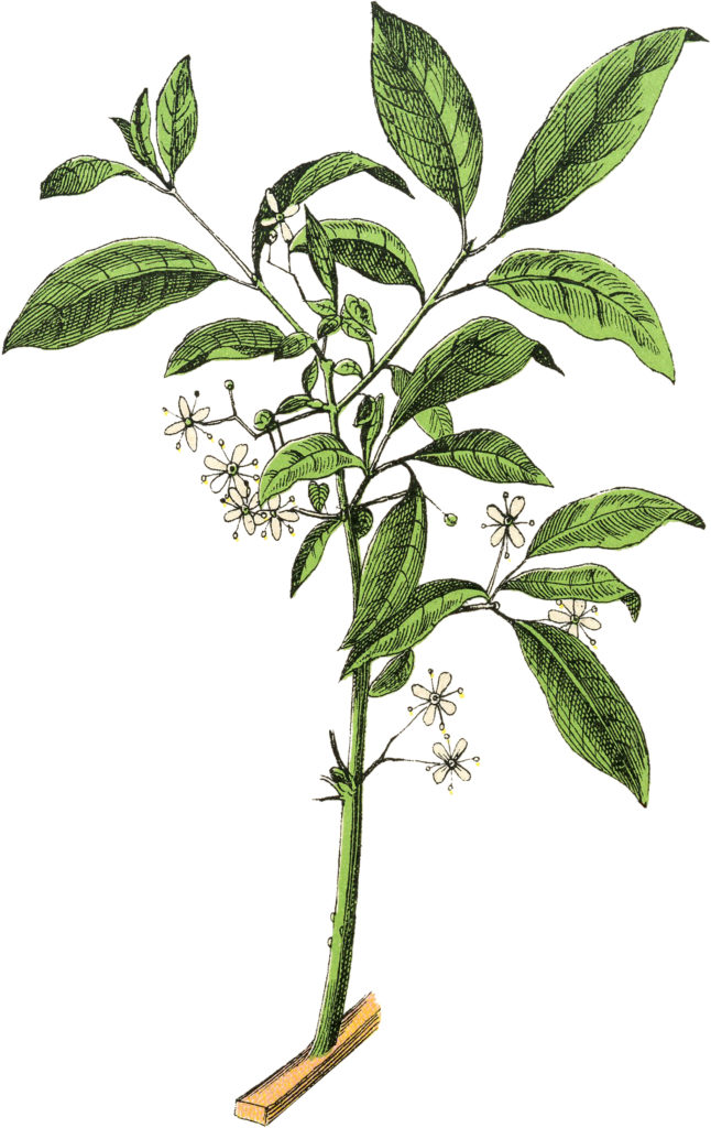 Delicate Botanical White Flower Image