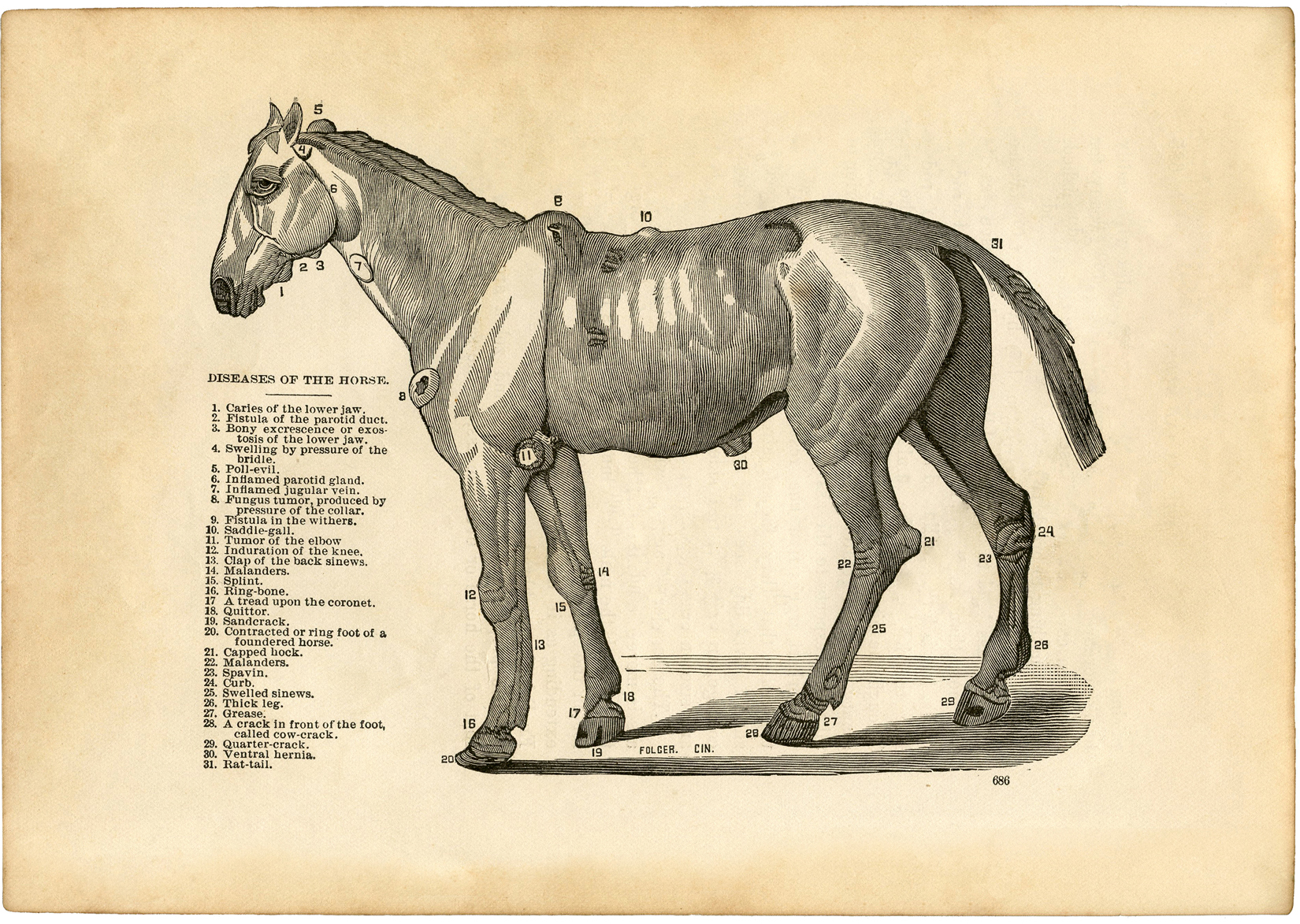 Vintage-Horse-Disease-Diagram-sm-GraphicsFairy