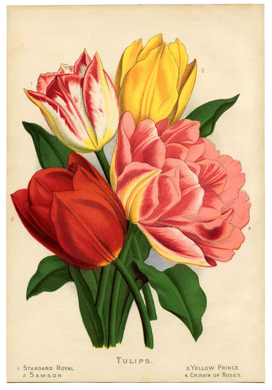 tulips-image-card-Graphics-Fairy