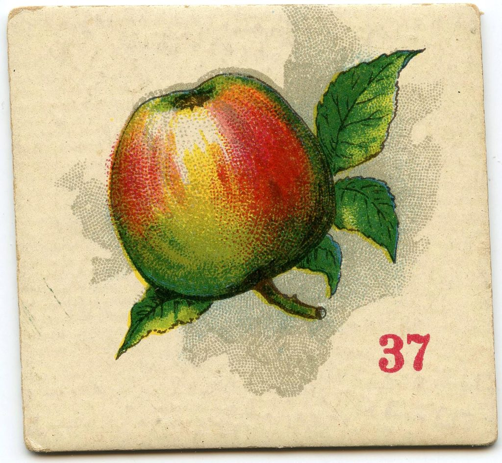 Apple Image Card