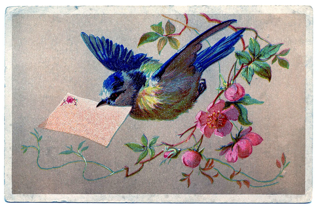 Bluebird with Card in Beek