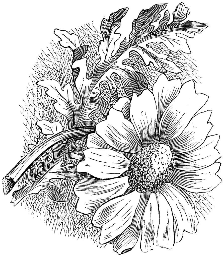 Daisy Engraving Image