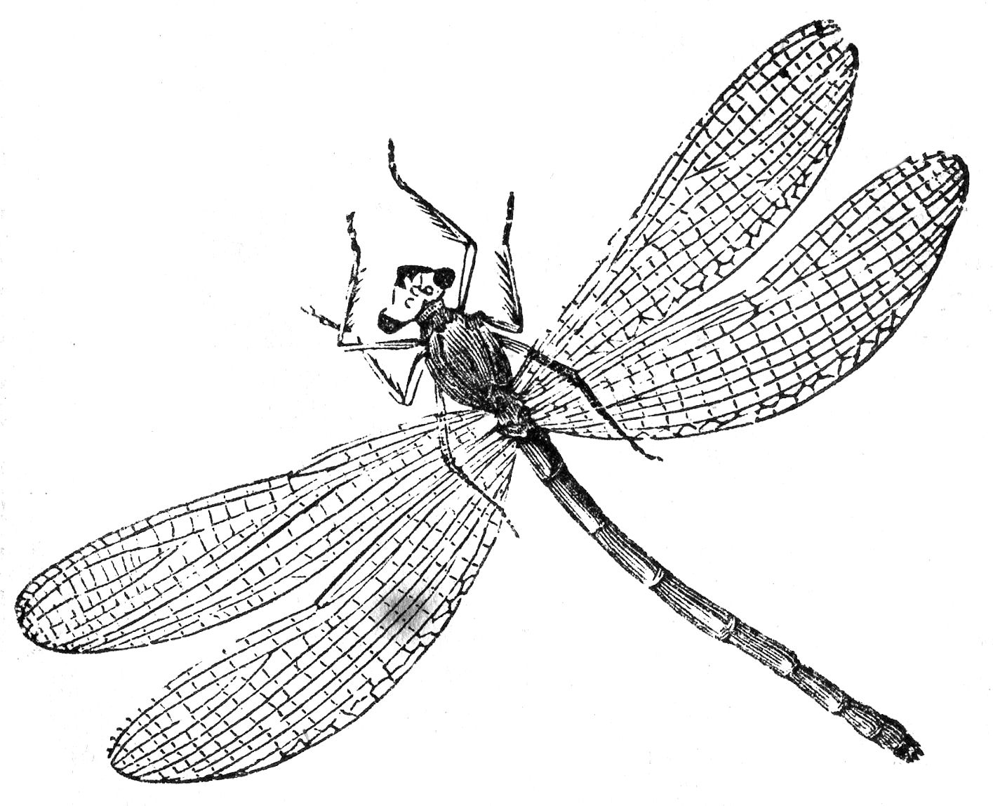 Dragonfly-Image-Vintage-Drawing-GraphicsFairy