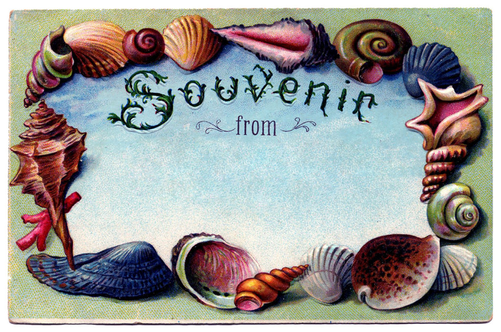 Vintage Seashell Postcard