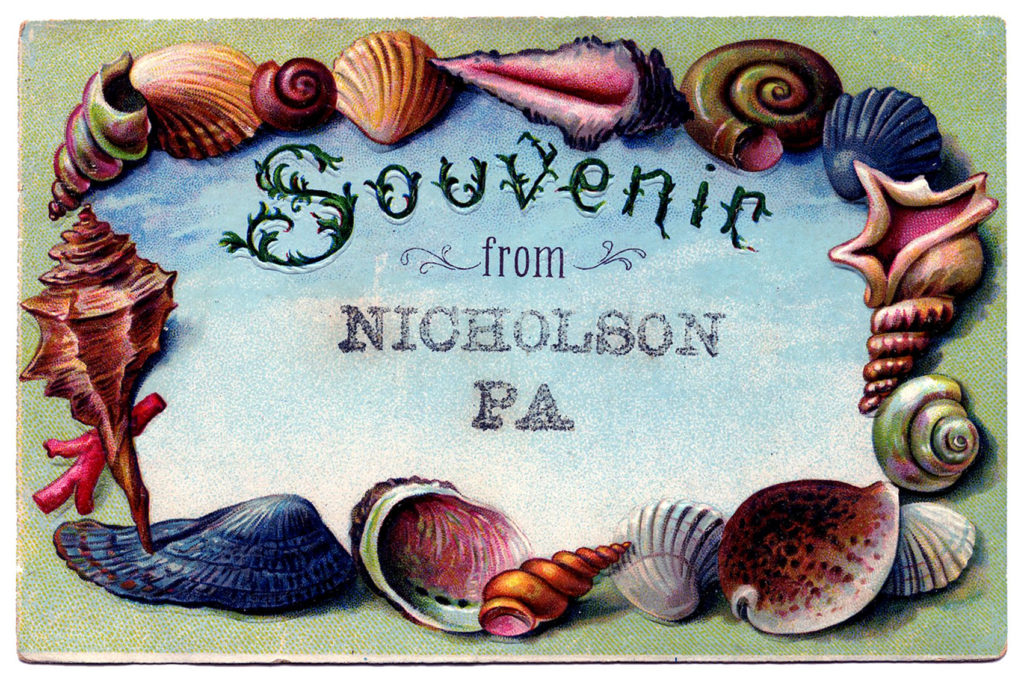 Souvenir Seashell frame postcard