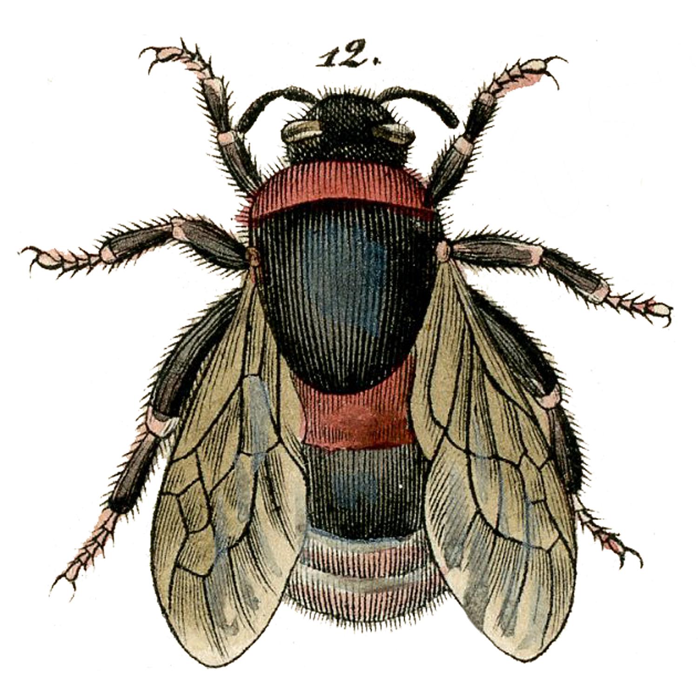 Vintage Bee Image