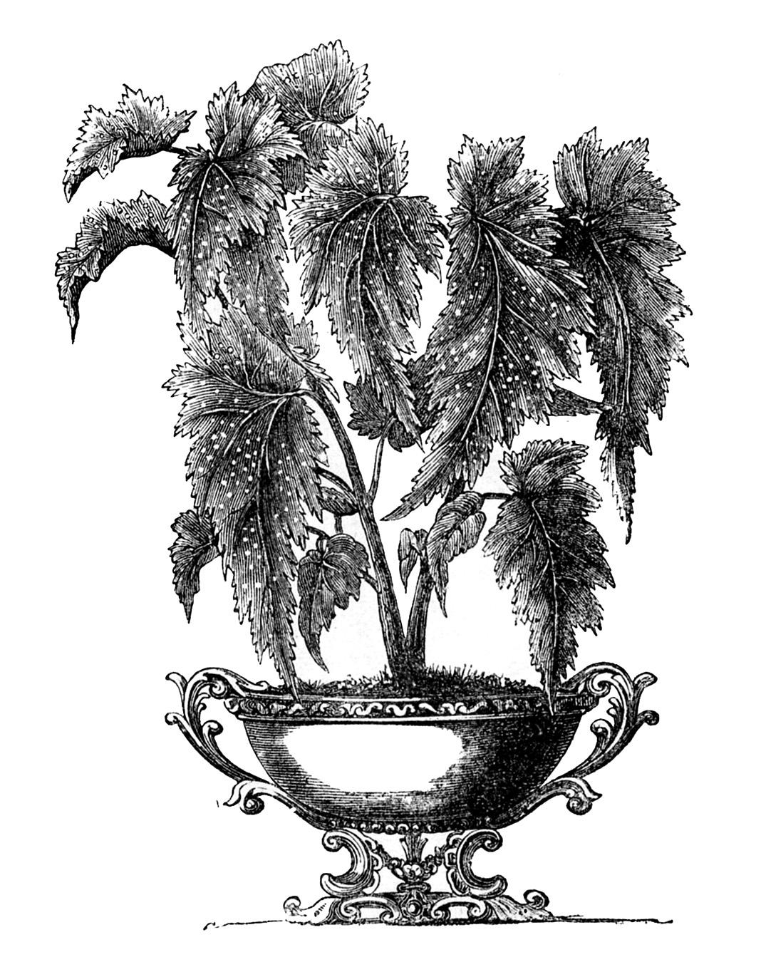Leafy-Potted-Plant-Vintage-Image-GraphicsFairy Palm Like Leaves Large Plant House on palm like succulents, palm like flower, palm like leaves, palm like fern, palm like weeds,