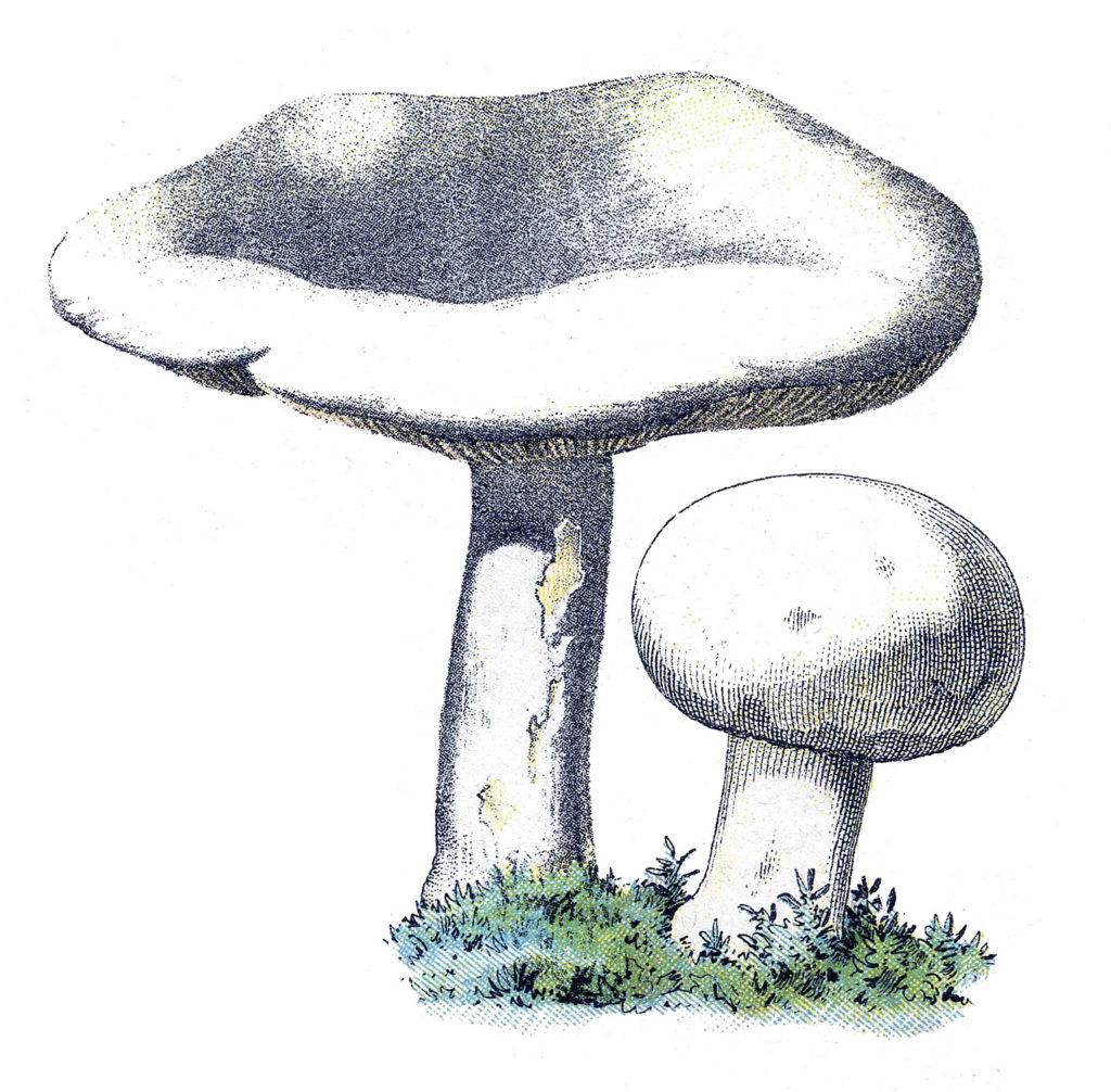 Cute Mushroom Pair