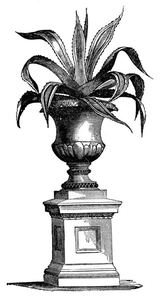 Elegant Victorian House Plant