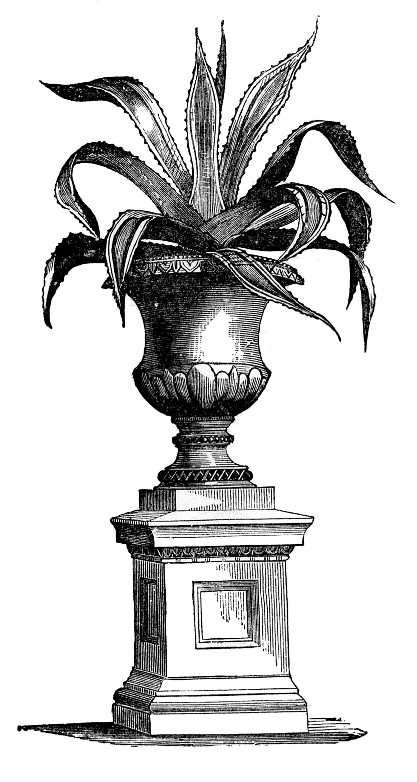 8 House Plant Images Victorian The Graphics Fairy