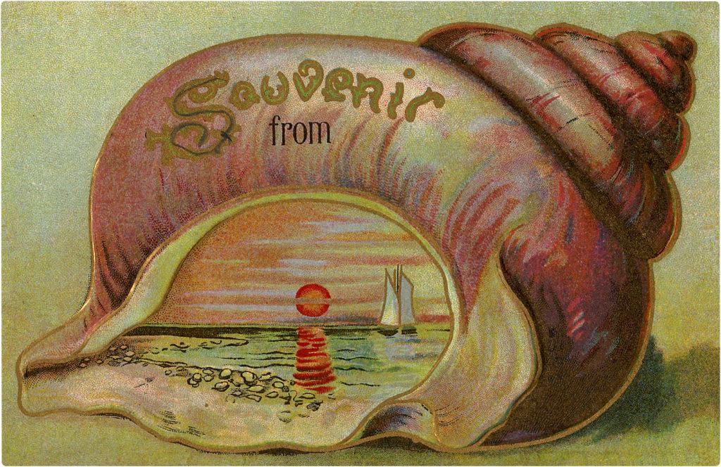 Souvenir Seashell Images
