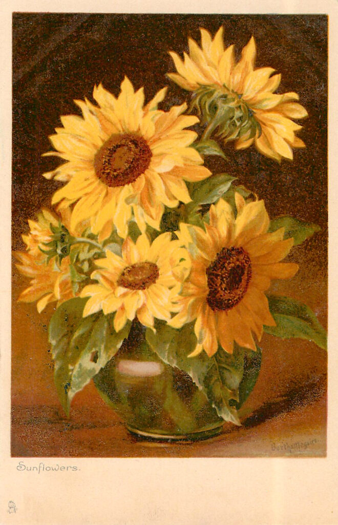 Sunflowers in Vase Picture