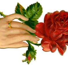 Hand with Red Rose