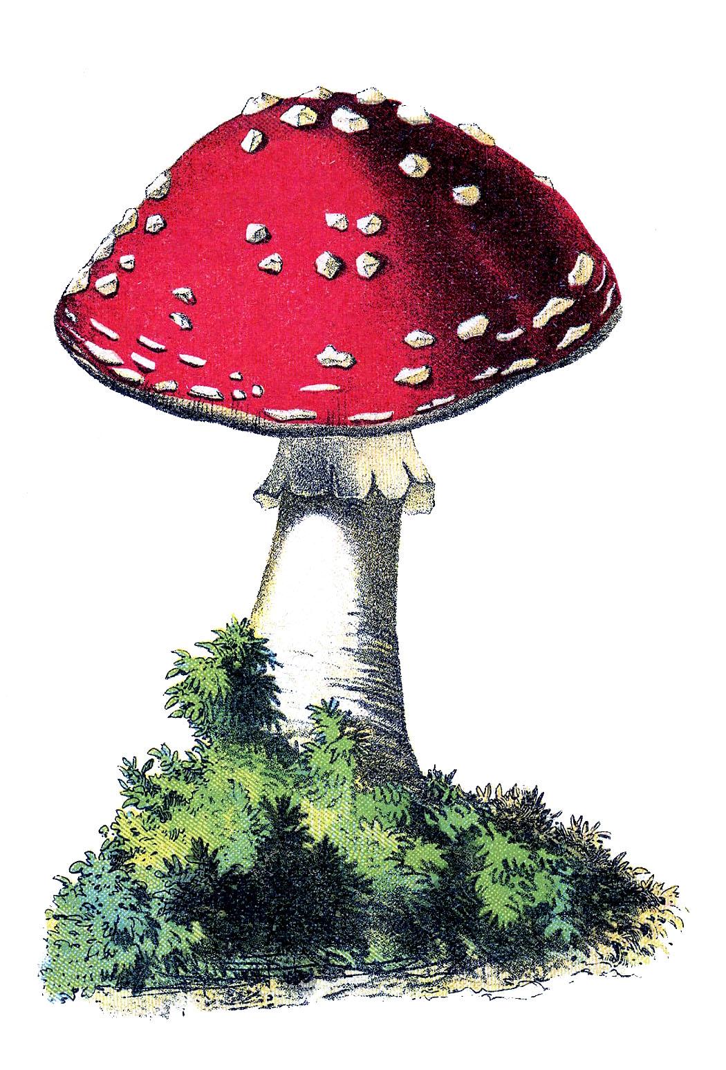 mushroom+red+vintage+image-graphicsfairy012