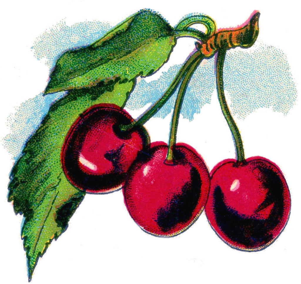 Cherry Clipart Picture