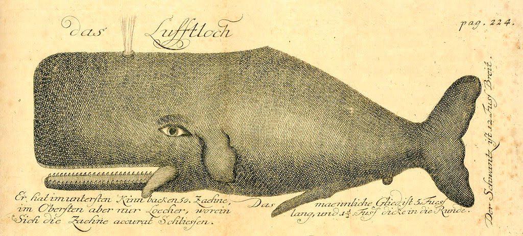 Whaling Deutsch