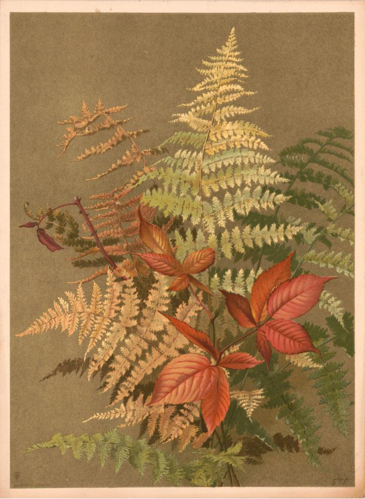 Ferns Vintage Image