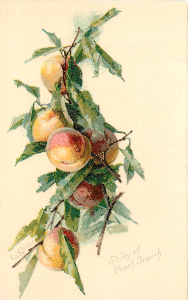 Peach Branch Image