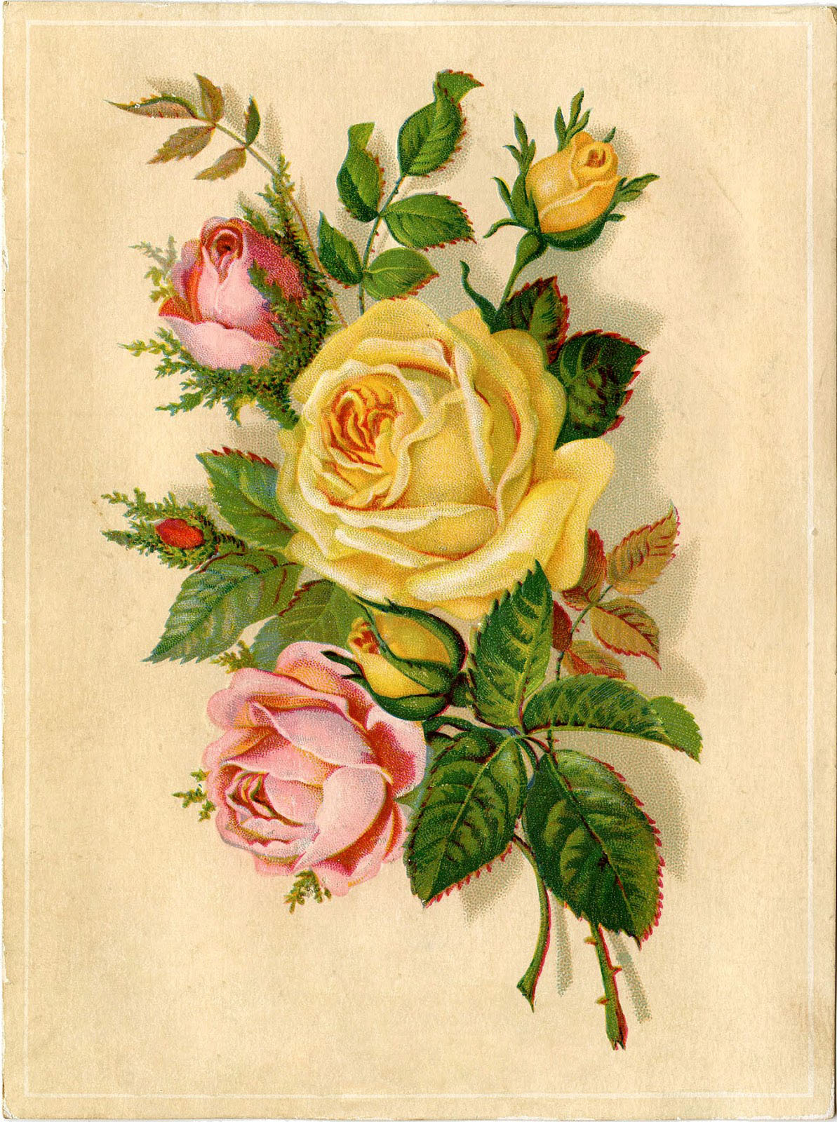 Roses-Yellow-Pink-Images-GraphicsFairy23