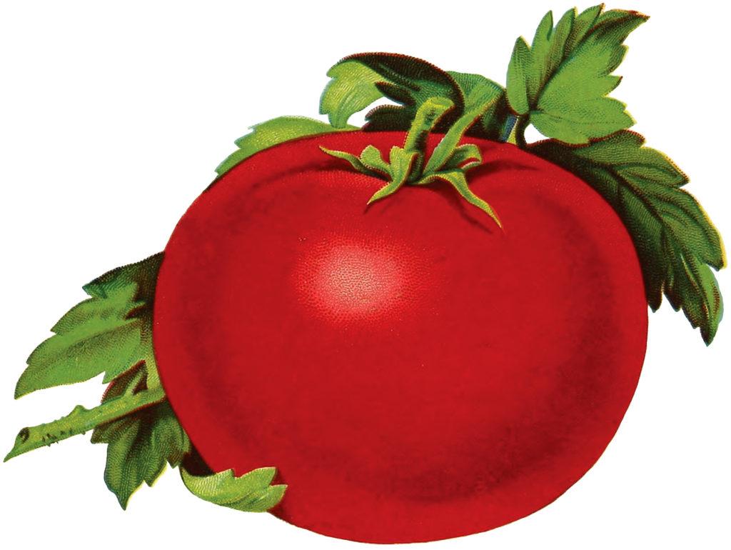 Free Tomato Image