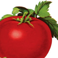 Image and Tomato